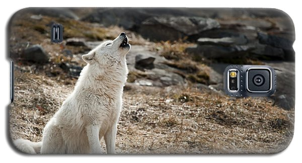 Galaxy S5 Case featuring the photograph Arctic Wolf Howling by Wolves Only
