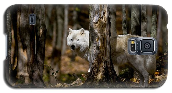 Galaxy S5 Case featuring the photograph Arctic Wolf In Forest by Wolves Only