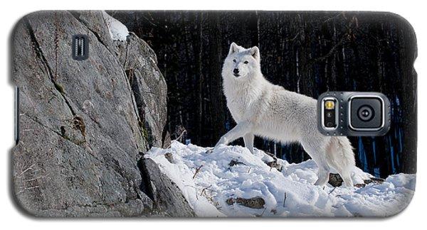 Galaxy S5 Case featuring the photograph Arctic Wolf On Rock Cliff by Wolves Only