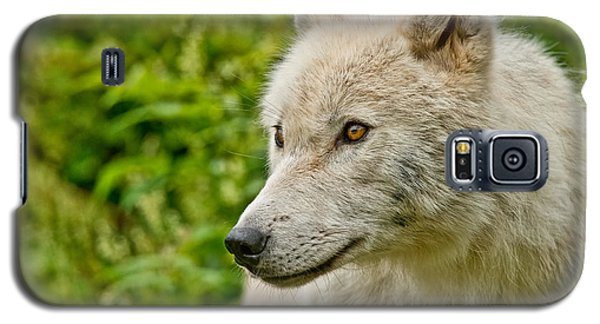 Arctic Wolf Pictures 241 Galaxy S5 Case