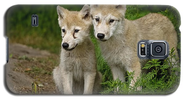 Arctic Wolf Puppies Galaxy S5 Case