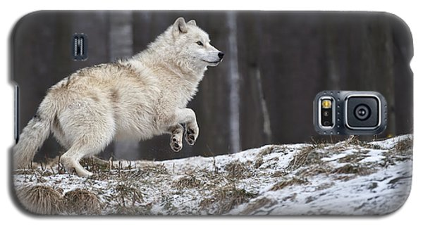 Galaxy S5 Case featuring the photograph Arctic Wolf by Wolves Only