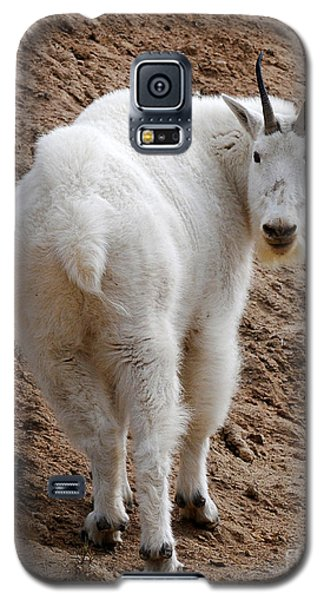 Galaxy S5 Case featuring the photograph Are You Following Me by Vivian Christopher