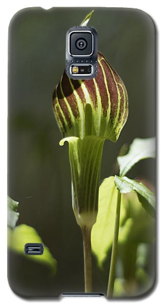Galaxy S5 Case featuring the photograph Arisaema Triphyllum Jack-in-the-pulpit by Rebecca Sherman