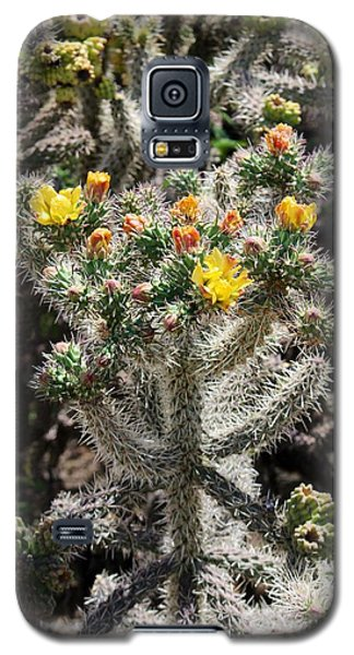 Arizona Cactus Galaxy S5 Case