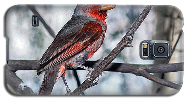 Arizona Cardinal Galaxy S5 Case by Elaine Malott