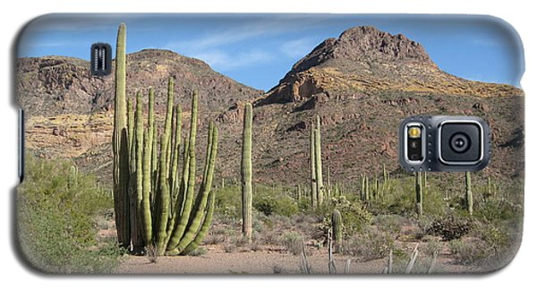 Arizona Desert Organ Pipe Cactus   Galaxy S5 Case