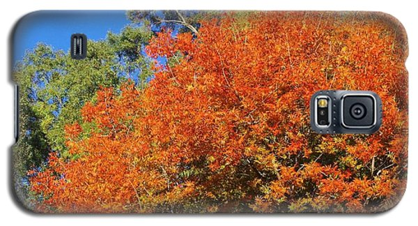 Galaxy S5 Case featuring the photograph Arizona Fall 3 by David Rizzo