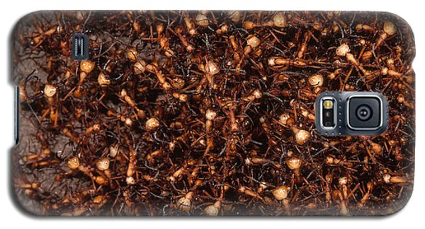 Army Ants Galaxy S5 Case by Art Wolfe