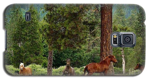 Around The Tree Galaxy S5 Case