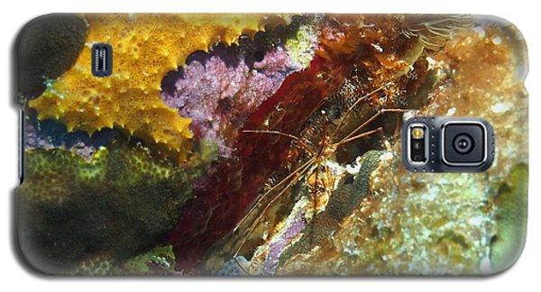 Galaxy S5 Case featuring the photograph Arrow Crab In A Rainbow Of Coral by Amy McDaniel