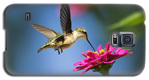 Art Of Hummingbird Flight Galaxy S5 Case by Christina Rollo