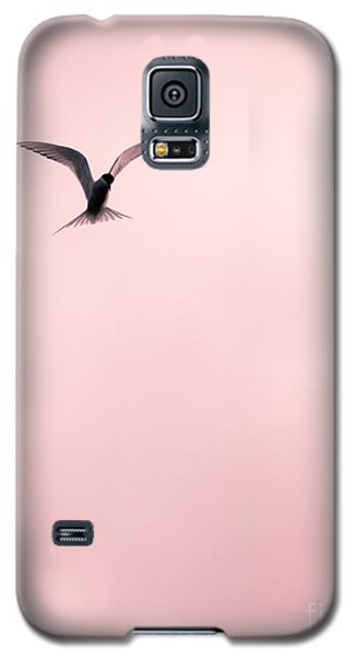 Galaxy S5 Case featuring the photograph Artic Tern High In The Sky by Peta Thames