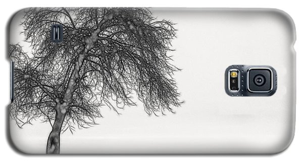 Artistic Black And White Sunset Tree Galaxy S5 Case