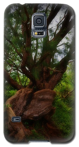 As The Tree Grows Galaxy S5 Case