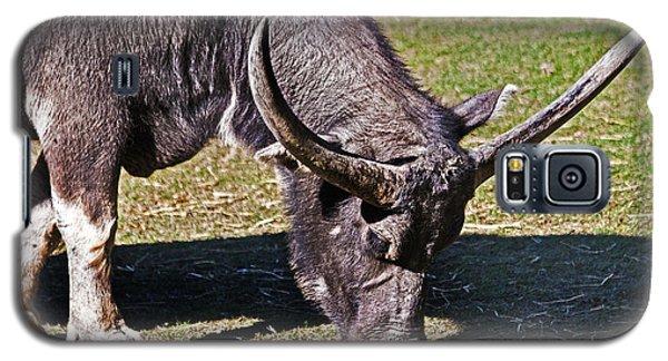 Asian Water Buffalo  Galaxy S5 Case