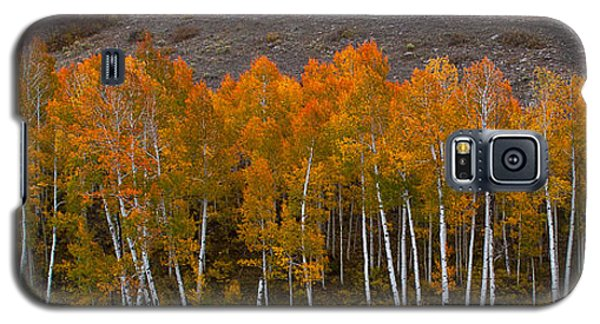 Galaxy S5 Case featuring the photograph Aspen Band by Steven Reed