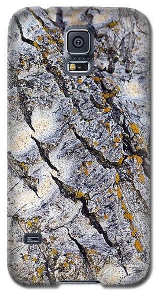 Aspen Bark Galaxy S5 Case by Dee Cresswell