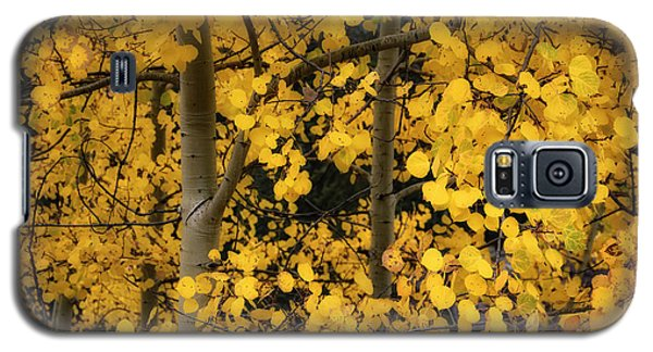 Galaxy S5 Case featuring the photograph Aspen Color by The Forests Edge Photography - Diane Sandoval