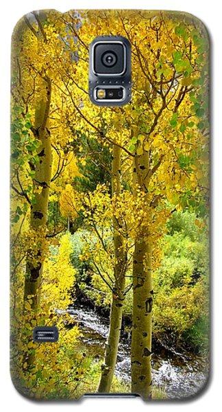 Aspen Gold Galaxy S5 Case by Marilyn Diaz