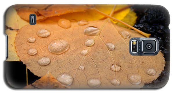 Aspen Leaf With Water Drops Galaxy S5 Case