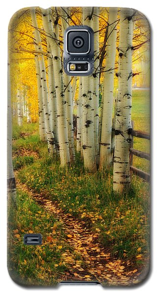 Galaxy S5 Case featuring the photograph Aspen Path by Ronda Kimbrow
