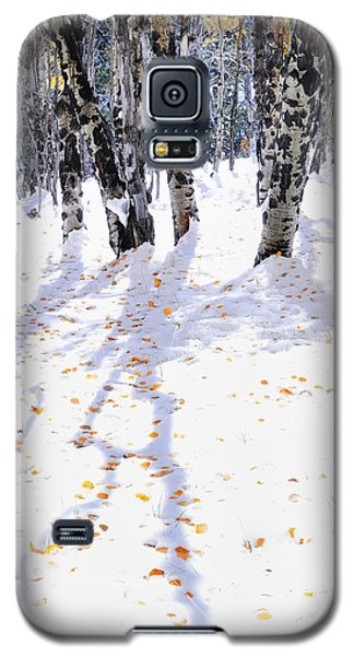 Galaxy S5 Case featuring the photograph Aspen Shadows by The Forests Edge Photography - Diane Sandoval
