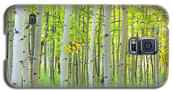 Aspen Tree Forest Autumn Time  Galaxy S5 Case