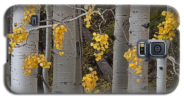 Aspen Trees Galaxy S5 Case