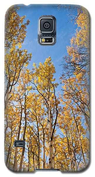 Aspen Trees In The Fall Galaxy S5 Case by Jeff Goulden