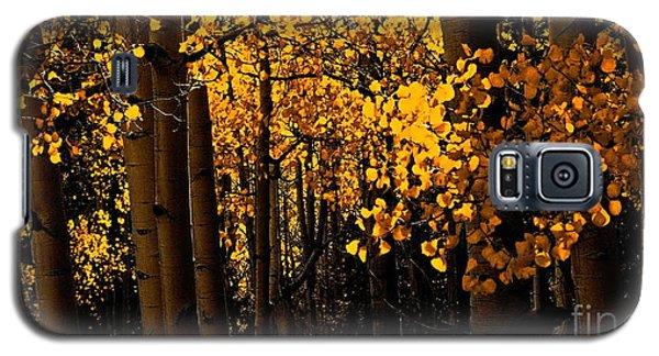 Aspen Woods Galaxy S5 Case