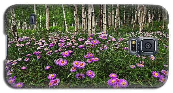Aspens And Asters Galaxy S5 Case