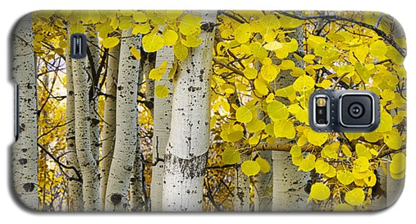 Aspens At Autumn Galaxy S5 Case
