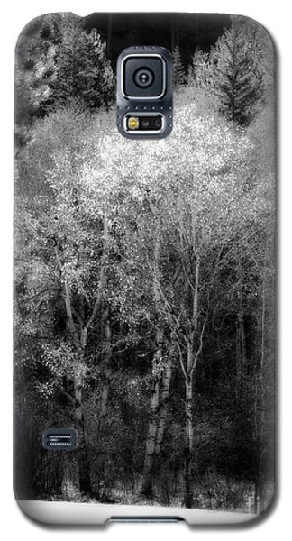 Aspens In Morning Light Bw Galaxy S5 Case