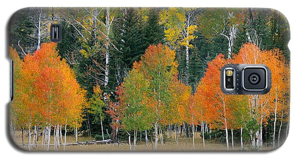 Aspens And Meadow-pan Galaxy S5 Case