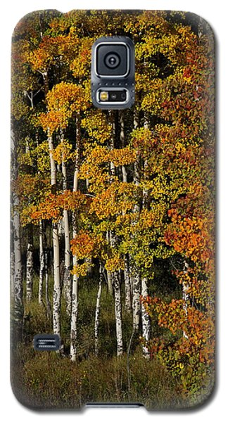 Aspens On Bobcat Pass Galaxy S5 Case