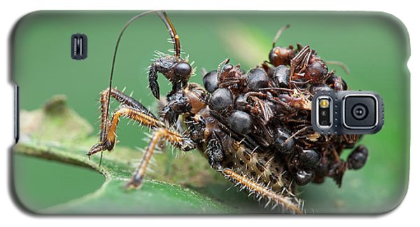 Assassin Bug Nymph With Ants Galaxy S5 Case by Melvyn Yeo