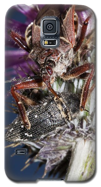 Assassin Bug Preying On Beetle Galaxy S5 Case
