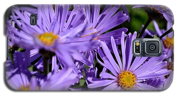 Galaxy S5 Case featuring the photograph Asters After The Rain by Scott Lyons