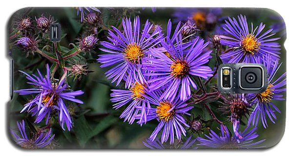 Asters In Autumn Galaxy S5 Case