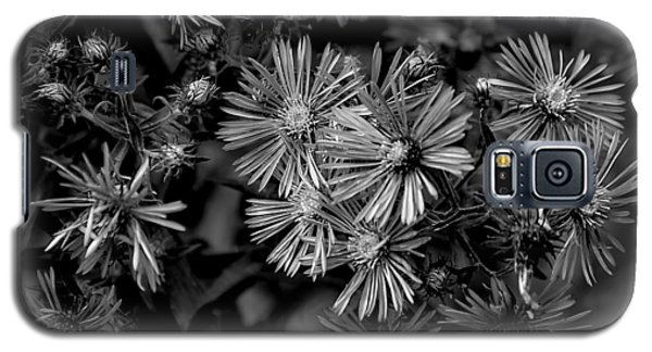 Asters In Monochrome Galaxy S5 Case
