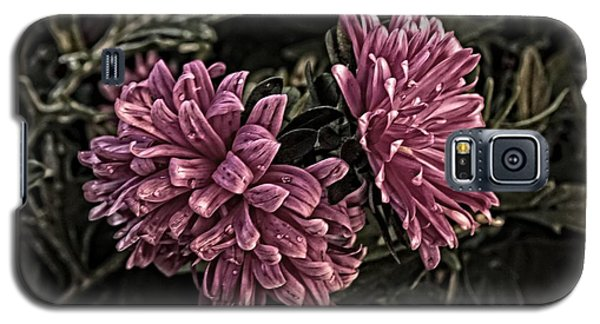 Galaxy S5 Case featuring the photograph Asters In The Garden by Marjorie Imbeau