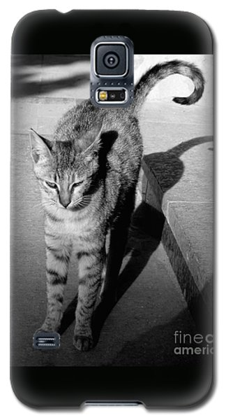 Aswan Cat Galaxy S5 Case