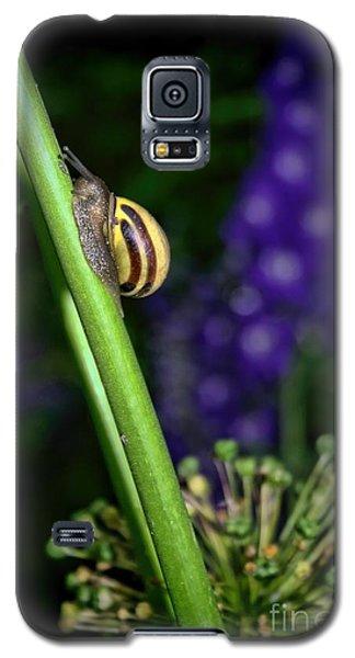 At A Snail's Pace Galaxy S5 Case by Henry Kowalski