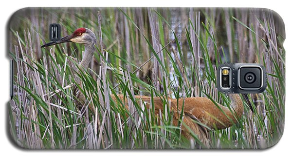 Galaxy S5 Case featuring the photograph At Home In The Marsh by Gary Hall