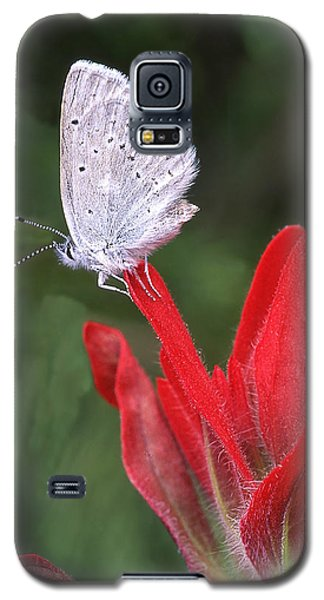 At Rest Galaxy S5 Case
