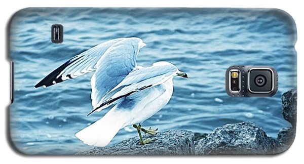 At The Waters Edge Seagull Galaxy S5 Case by Margaret Newcomb