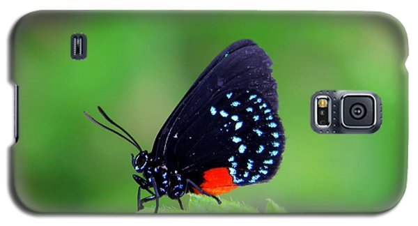 Atala Butterfly Galaxy S5 Case