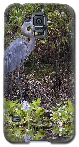 Atchafalaya Swamp Blue Heron Galaxy S5 Case