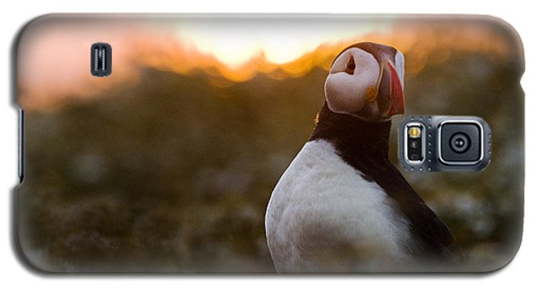 Atlantic Puffin At Sunrise Skomer Galaxy S5 Case by Sebastian Kennerknecht